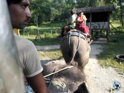 Elephant safaris are very popular in Sauraha.