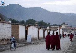 young monks on their evening walk