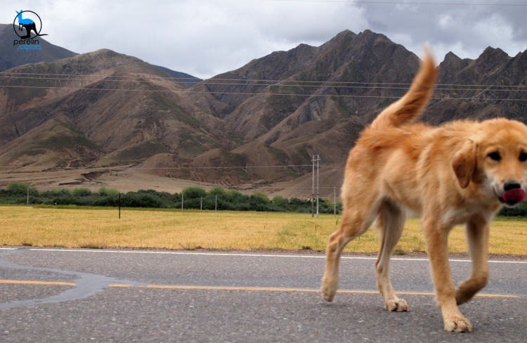 A stray dog we met while waiting our due time to continue along the Friendship Highway.