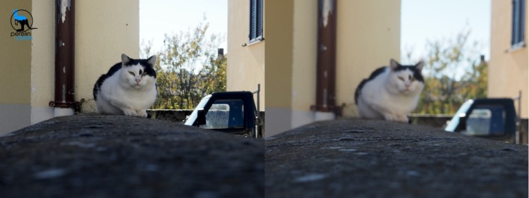On the left: a picture of my neighbor's cat. On the right: a close-up of the wall she likes to sit on.