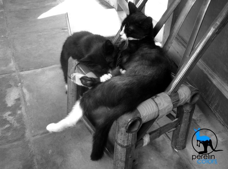 Cats in Beijing