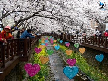 Decorated stream in Jinhae