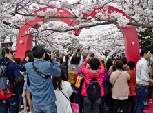 At the Jinhae Cherry Blossom Festival