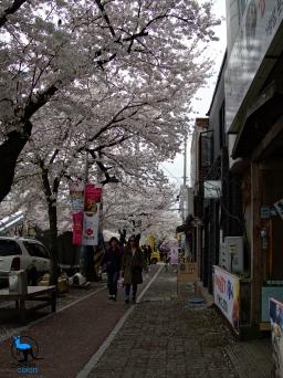 A street in Jinhae