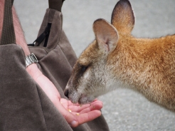 My brother feeding a wallaby.