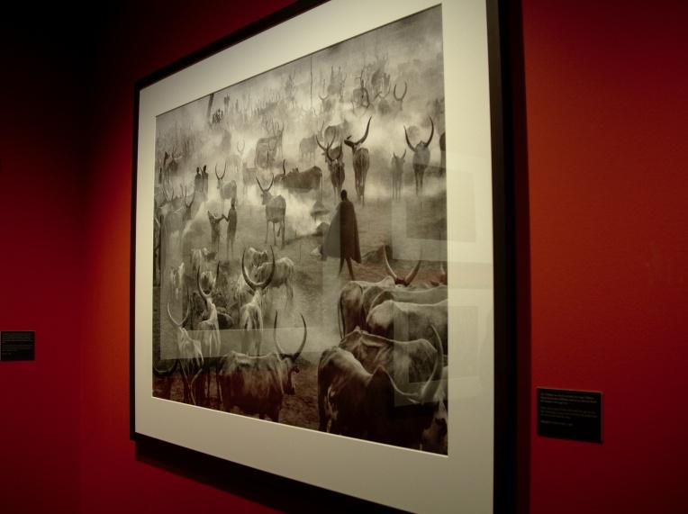 Salgado's Genesis exhibition at c|o Berlin